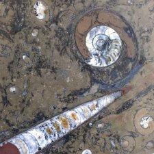 image 06-kamien-naturalny-marmur-fossil-brown-jpg